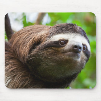 Sloth on tree mouse pad