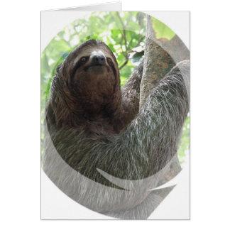 Sloth Photo Design Greeting Card