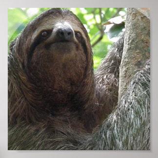 Sloth Photo Poster Print