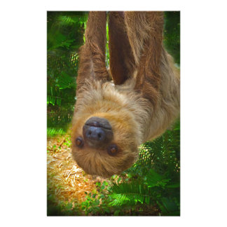 Sloth Rainforest Gifts Customized Stationery