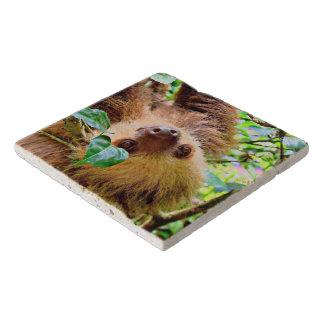 Sloth Trivet