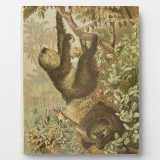 Sloths are Super Plaque