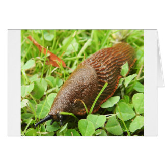 Slug Card