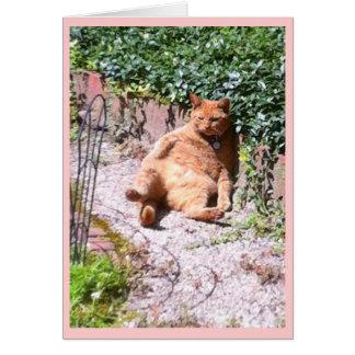 Sluggish Kitty Greeting Card