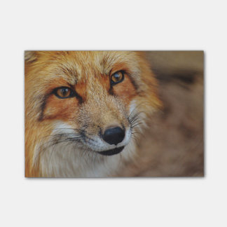 Sly Fox Post-it® Notes