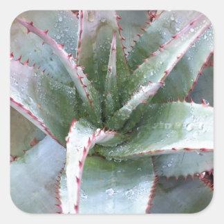 Small agave square sticker