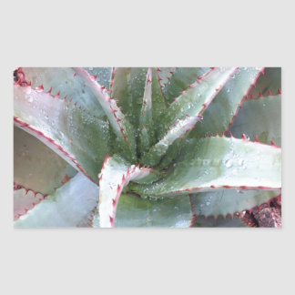 Small agave sticker