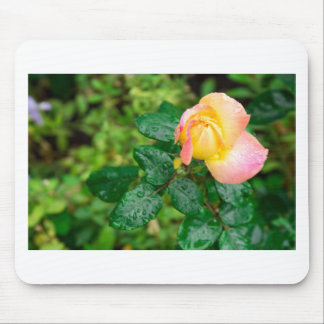 Small autumn rose with droplets mouse pad