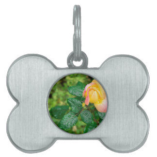Small autumn rose with droplets pet ID tag