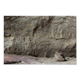 Small Bird, Large Rock Photo