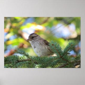 Small Bird Poster
