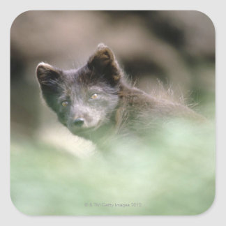Small Black Wolf Square Sticker