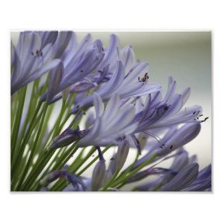 Small Bloom Photo Print