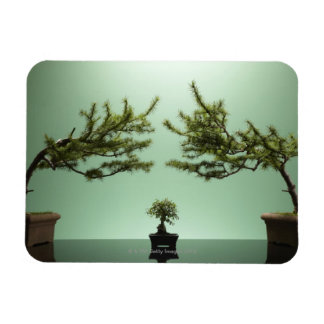 Small bonsai tree between two large bonsai trees magnet