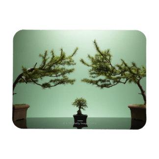 Small bonsai tree between two large bonsai trees rectangular photo magnet