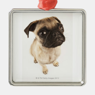 Small breed of dog with short muzzled face. Silver-Colored square ornament