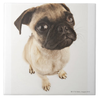Small breed of dog with short muzzled face. tiles
