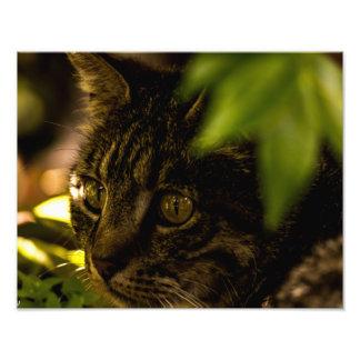 Small Cat up Close Photo Art
