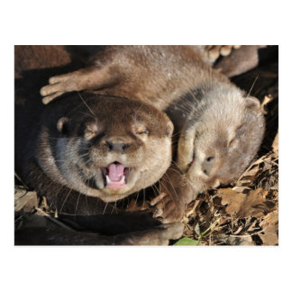 Small clawed otter postcard