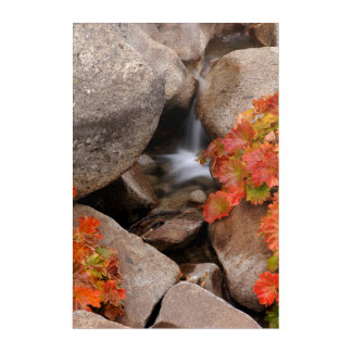 Small creek in autumn, California Acrylic Wall Art