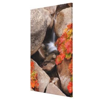 Small creek in autumn, California Canvas Print