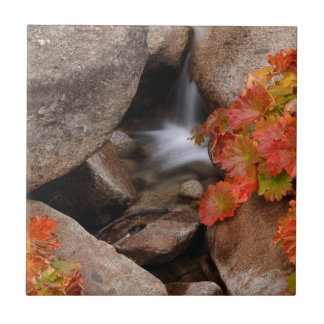 Small creek in autumn, California Ceramic Tiles