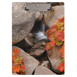 Small creek in autumn, California Clipboard