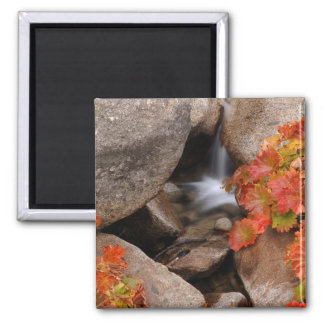 Small creek in autumn, California Magnet