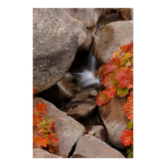 Small creek in autumn, California Poster