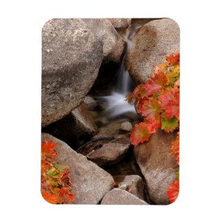 Small creek in autumn, California Rectangular Photo Magnet