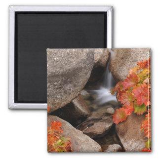 Small creek in autumn, California Square Magnet