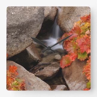 Small creek in autumn, California Square Wall Clock