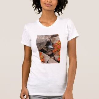 Small creek in autumn, California T-Shirt