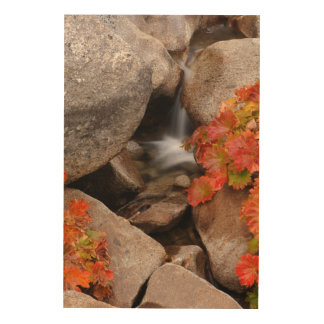 Small creek in autumn, California Wood Print