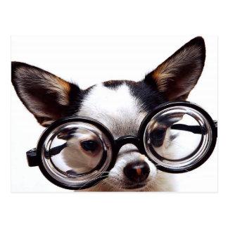Small Dog, Big Glasses Postcard