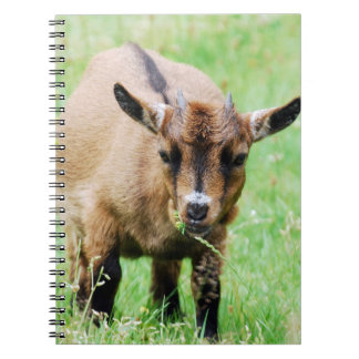 Small goat support - photo: Jean Louis Glineur Spiral Notebook