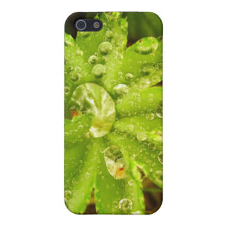 Small Green Plant iPhone 5/5S Covers