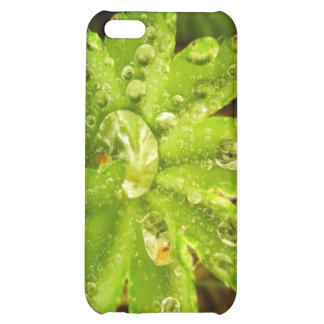 Small Green Plant Cover For iPhone 5C