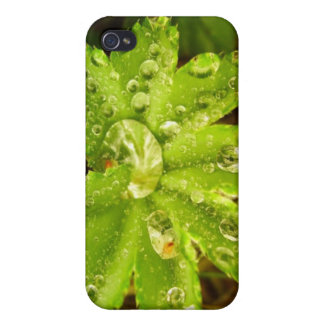 Small Green Plant iPhone 4/4S Cases