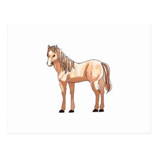 SMALL HORSE POSTCARD