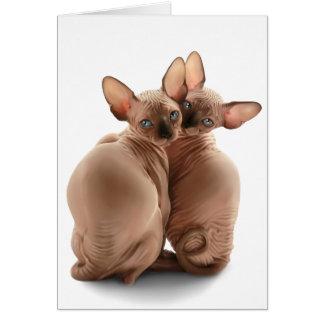 Small kittens Sphynx. Card