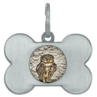 Small Owl In Camouflage Pet Tag