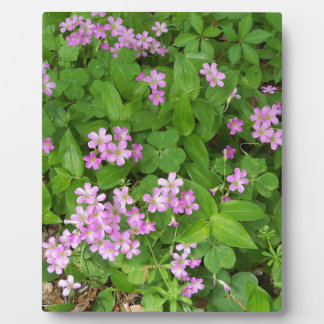 Small pink delicate wildflowers plaque