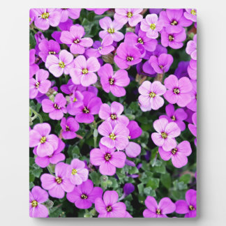 Small Purple Flowers Plaque