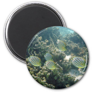 Small School of Butterfly Fish 2 Inch Round Magnet