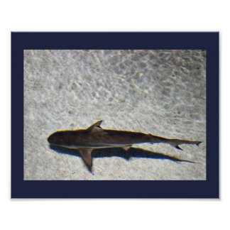 Small Shark Photo Poster