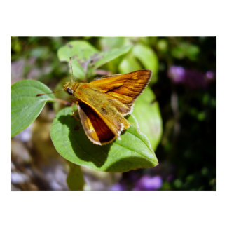 Small Skipper Butterfly Poster