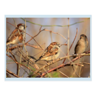 Small sparrow in the sunshine postcard