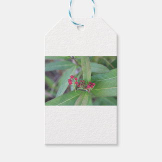 Small Spring Blooms Gift Tags