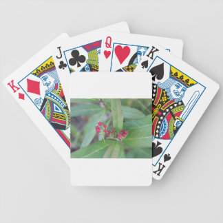 Small Spring Blooms Poker Deck